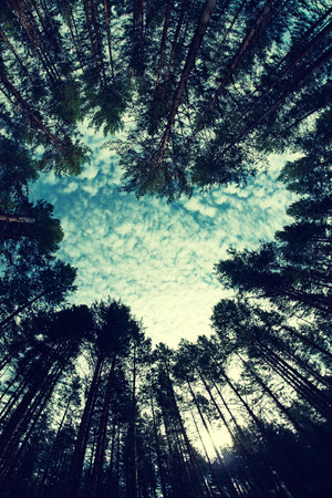 fish eye lens: forest - low angle shot in summer, fish eye lens, in the shape of heart