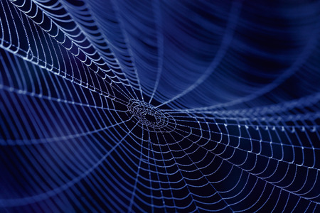 Spider Web close up in the dark