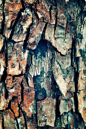 social grace: abstract background of pine bark close up