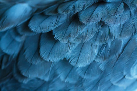 wing of bird close up