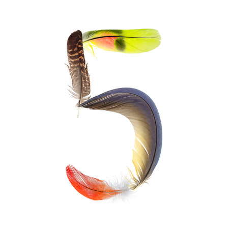 educaton: number five 5 from pen feathers of birds Stock Photo