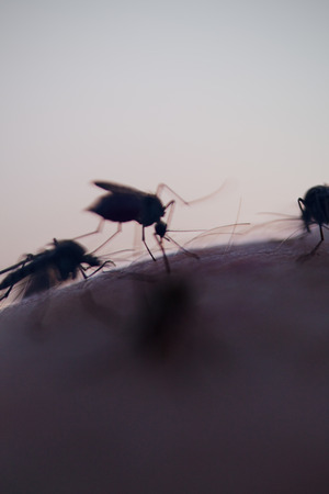 taint: many mosquitos on a human skin in the evening