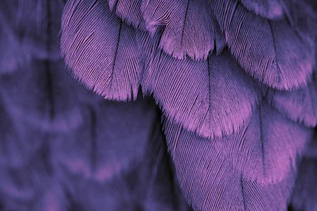 鳥の羽の背景をクローズ アップ