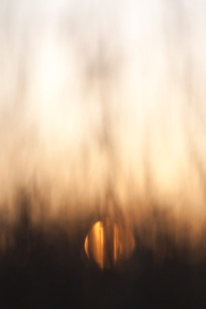 siluetas: abstract blurred background - sunset in the forest Stock Photo