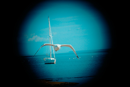 clear day: travel concept - sea, yacht and Silvery seagulll in a clear day in summer, effect view through a telescope Stock Photo