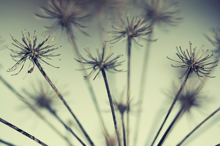 siluetas: abstract dry flower in winter, retro style image