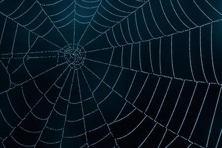 暗闇の中で蜘蛛の巣をクローズ アップ 写真素材