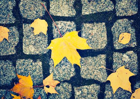 pavimento de adoquín y hojas amarillas en otoño, estilo vintage Foto de archivo