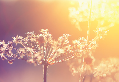 frozen dry flower in winter, vintage style photography