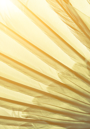 color tone: wing of bird close up, hipster color tone Stock Photo