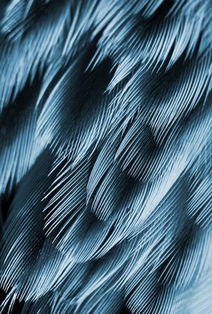 color tone: plumage background of bird closeup, blue color tone Stock Photo