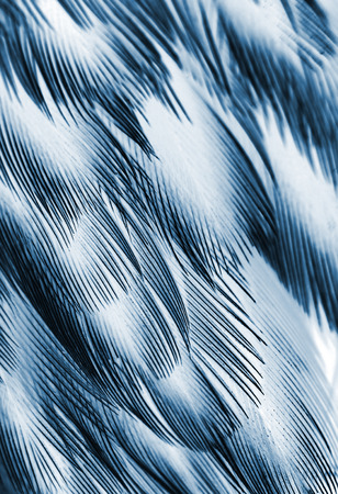 bird feathers: plumage background of bird closeup, x-ray effect