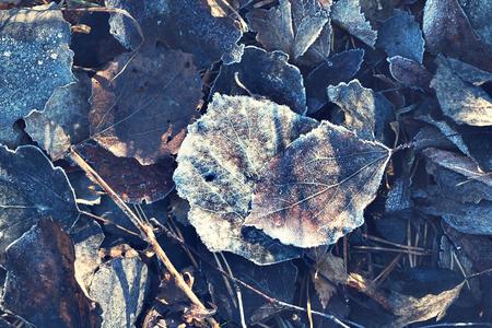 dode bladeren: bevroren dode bladeren in de herfst