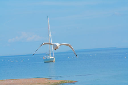 clear day: travel concept - sea, yacht and Silvery seagulll in a clear day in summer