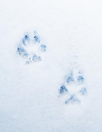 huellas de perro: pawprints de un perro en la nieve