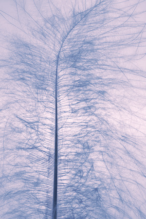 floccus: The down feather of bird closeup.