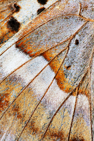 frailty: abstract background - wing of butterfly close-up