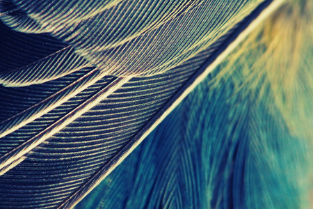 plumage background of bird closeup, vintage effect