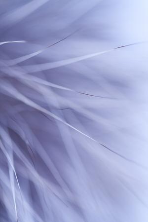 animal fur: abstract background - animal fur closeup