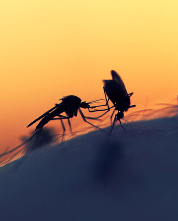 taint: mosquitos on a human skin at sunset