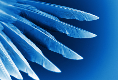 animals x ray: wing of bird close-up, x-ray effect