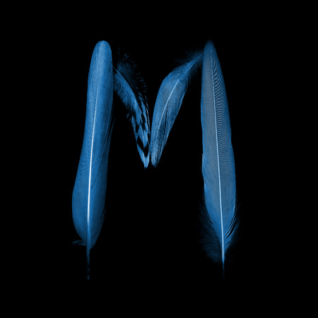 animals x ray: alphabet - letter M from bird feathers, x-ray effect