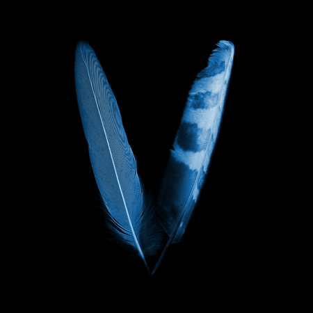bird feathers: alphabet - letter V from bird feathers, x-ray effect