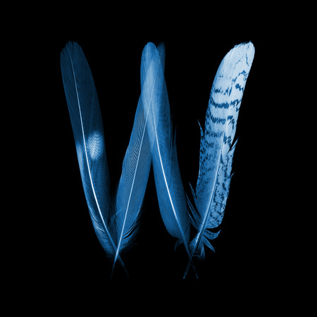 x rays negative: alphabet - letter W from bird feathers, x-ray effect Stock Photo