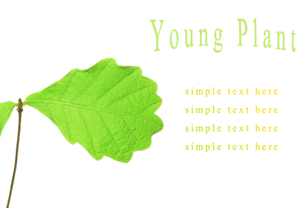 young plant: young plant on a white background Stock Photo