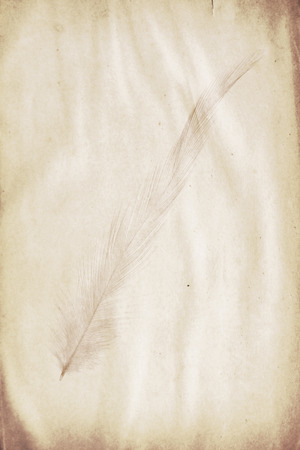 watermark: watermark in the form of a feather on the grunge paper