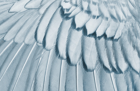 animals x ray: wing of bird close up, x-ray effect effect