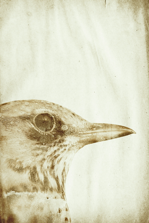 siluetas: grunge paper with bird watermark Stock Photo
