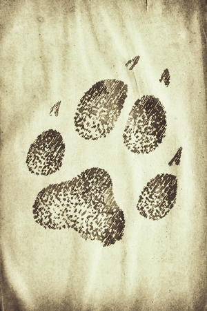 siluetas: wolf footprint on the grunge paper Stock Photo