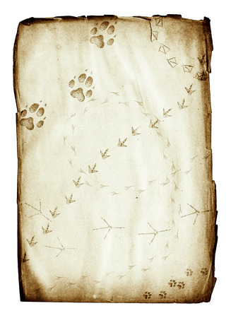 grunge paper sheet with animal footprints isolated on white