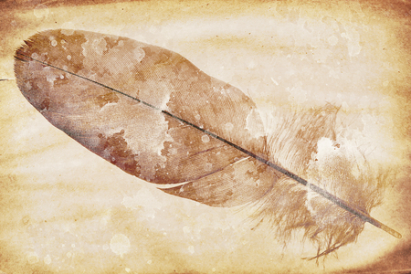 siluetas: watermark in the form of a feather on the grunge paper
