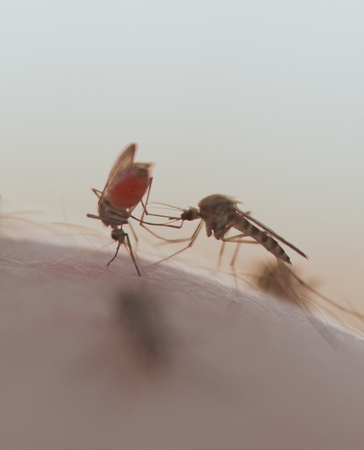 mosquitos: mosquitos on a human skin, retro style photo Stock Photo