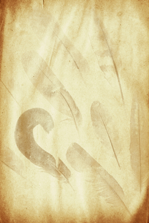 watermark: grunge paper sheet with feathers watermark