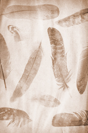 feathers on the grunge paper Stock Photo