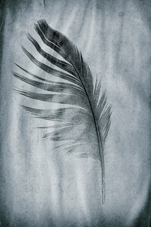 picture feather on the grunge paper