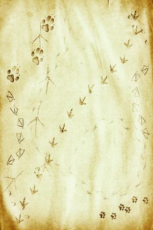 siluetas: animal footprints on the grunge paper Stock Photo