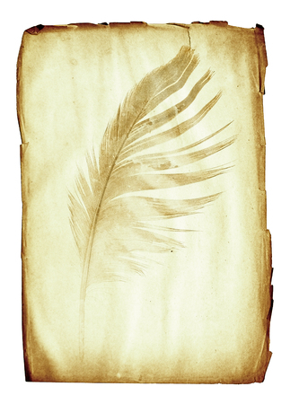 siluetas: watermark in the form of a feather on the grunge paper sheet Stock Photo