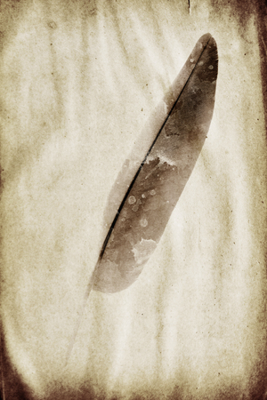 siluetas: picture feather on the grunge paper