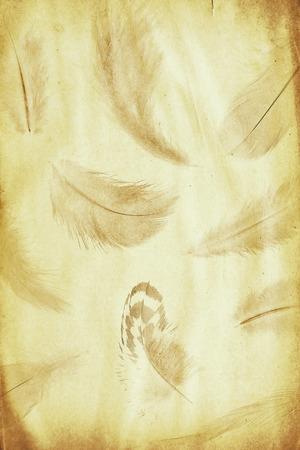siluetas: grunge paper sheet with feathers watermark