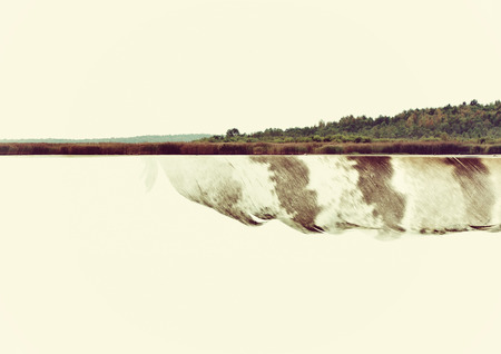 double reed: double exposure with feather and forest, nature concept