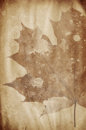 grunge paper with maple leaf watermark