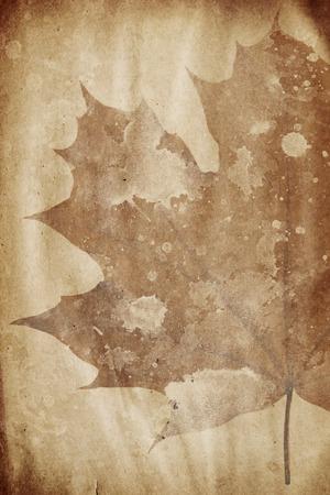 siluetas: grunge paper with maple leaf watermark