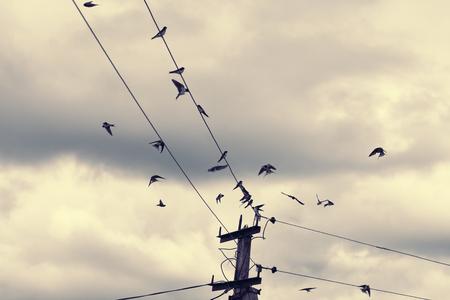 siluetas: migraiting barn swallows (Hirundo rustica) on wires, vintage style photograph Stock Photo