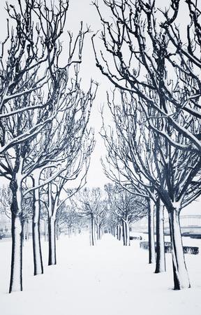 monochromatic: empty alley in winter, seasonal feature, monochromatic toned