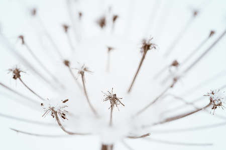 abstract dry flower in winter Stock Photo