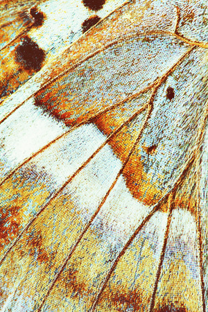 frailty: abstract background - wing of butterfly close-up, vintage color effect Stock Photo